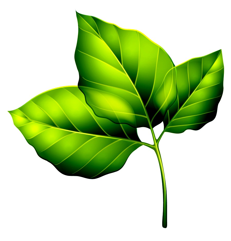 kisspng-leaf-green-clip-art-three-green-leaves-png-clipart-image-5a7673cac500f9.2958533215177123308069